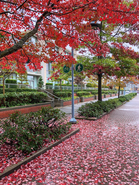 Autumn Leaves - Vancouver, Canada
