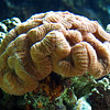 "Underwater ""Brain"", Aquarium"