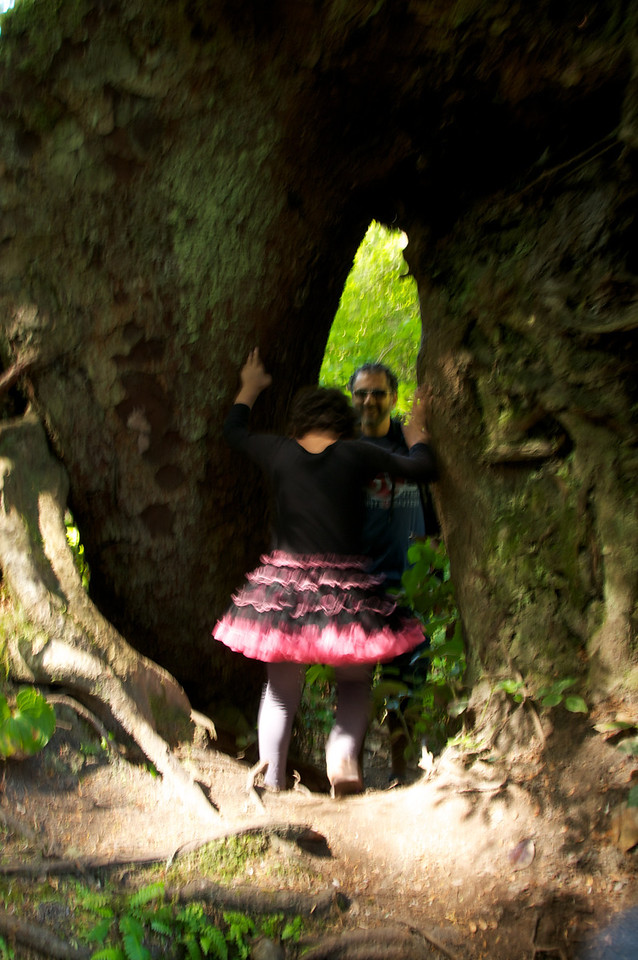 Back in the forest, Cyane finds a ittle tunnel through a big tree