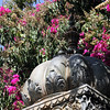Sahelion Ki Bari Gardens - Detail