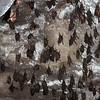 Ellora Cave 16 Kailasa Temple Complex - Bats