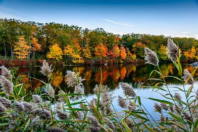Dusk by a Lake