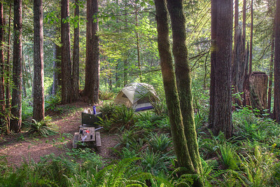 Camping in the redwoods. Small ones. This land on which this campground now exists was once completely logged off, so what you see is all at least second growth.