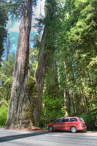 California rte 101, Jedediah Smith Redwoods State Park. Yes, they are that big.
