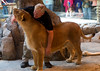 Lion at MGM Grand