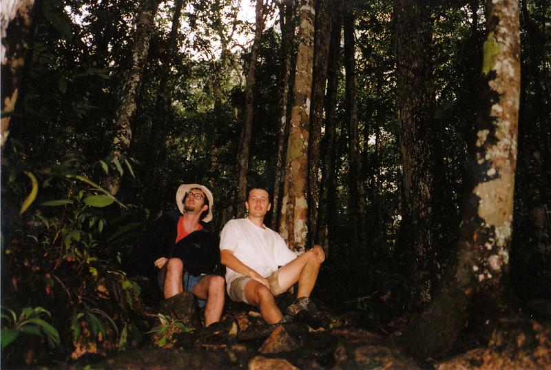 Selva del Parque Nacional de Canaima