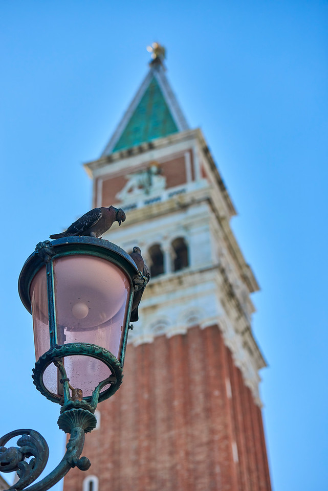 Pigeons and the Campanile