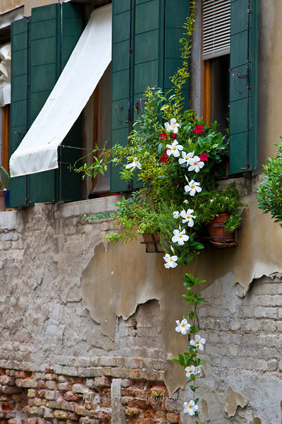 Window and flowers, Venice, Italy