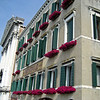 Flowers in windows of Venice