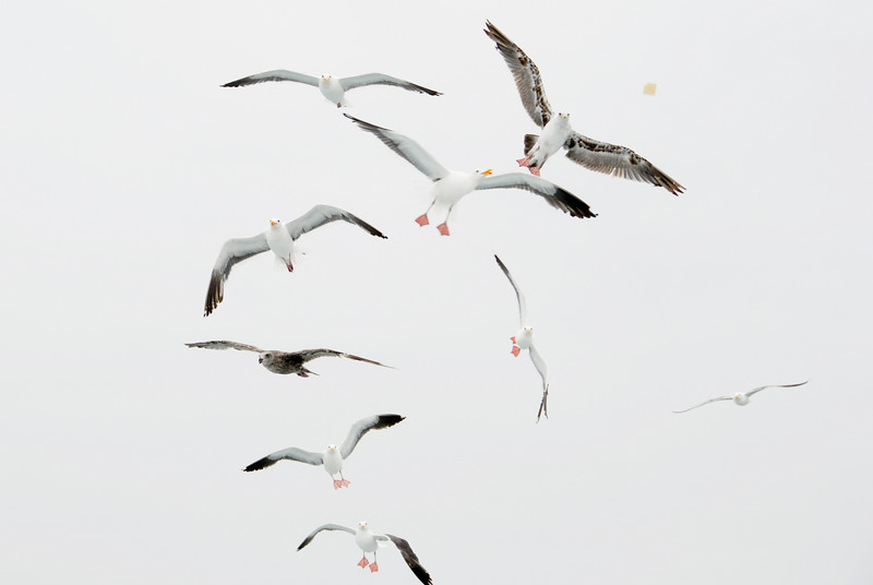 """<span id=""""title"""">Seagull Stack</span>"""