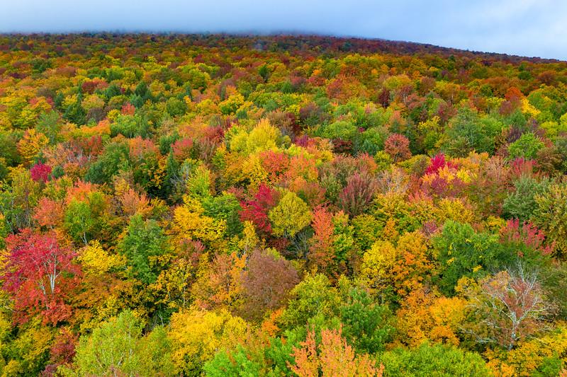 Peak Foliage - Vermont