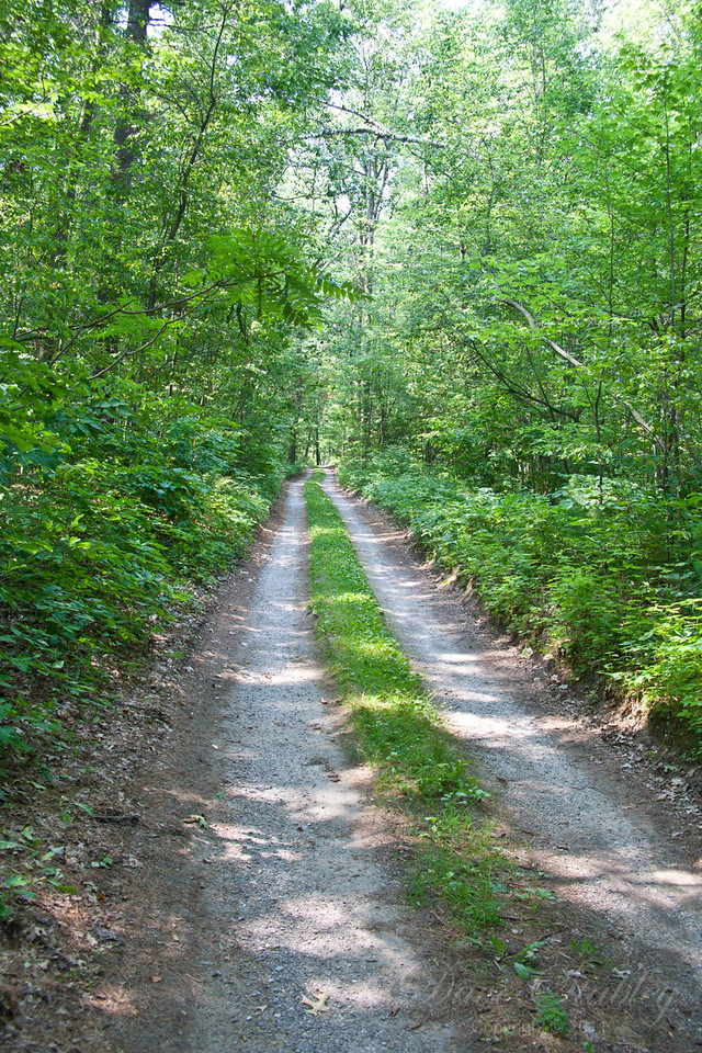 The Road to Relaxation - this is the road that leads into the compound, and the ultimate in peace and relaxation,