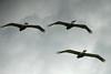 Synchronized Flying