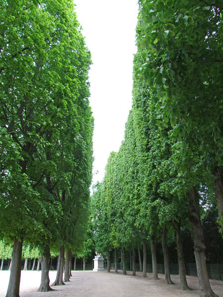 "Very tall ""hedges"" form beautiful mazes througout the hundreds of acres of garden"