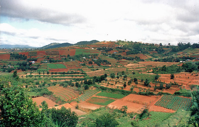 Terraced fields Lam Đồng Việt Nam - Aug 2002