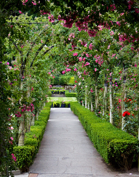 It's almost miraculous to get a shot anywhere without people, much less this rose arbor!