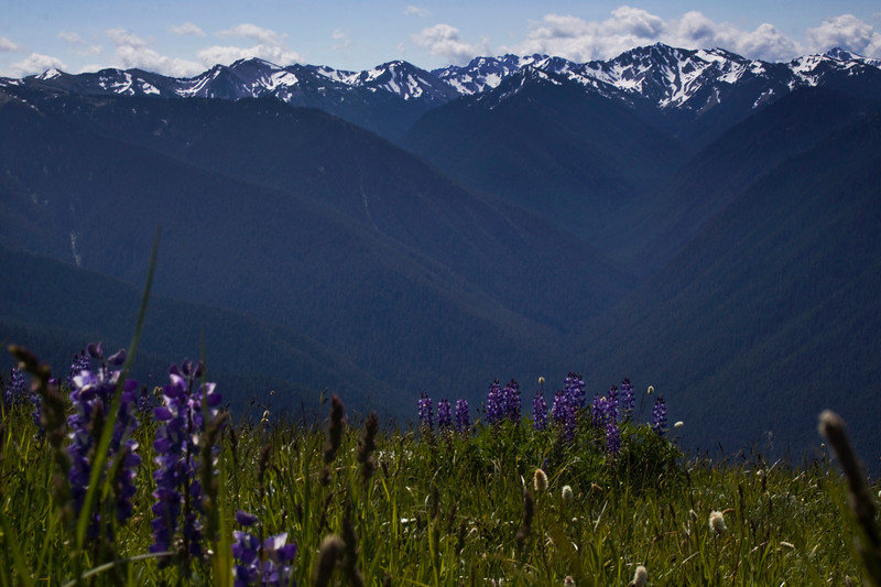 Sitting on the Edge of Forever<br /> Olympic mountain range in Washington state
