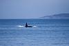 Whale fin!