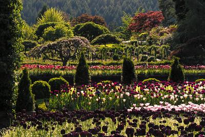 Butchart Gardens - Victoria, B.C.