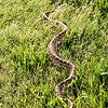A snake in the grass! St. Fidelis Cemetery, Victoria, KS