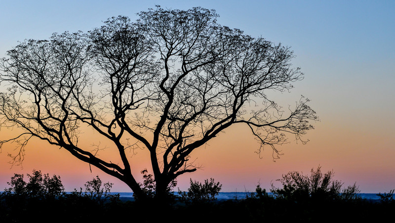 African tree against the sunset in Livingstone, Zambia