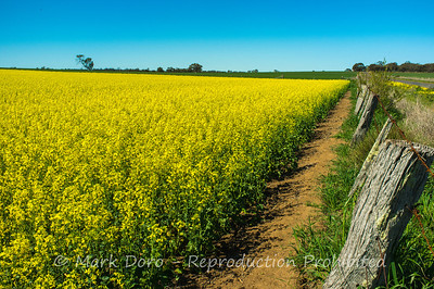 Canola fields, north of Little Desert, Victoria