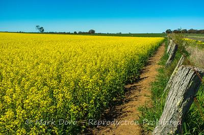 Canola fields, north of Little Desert, Victoria