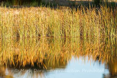 Little Desert waterhole, Little Desert, Victoria