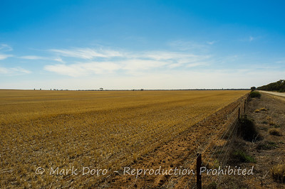 Wheat fields, near Ouyen, Victoria