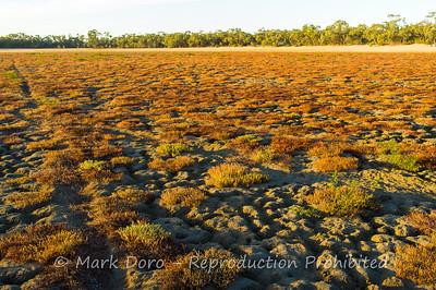 Dry lake bed, Green Lake, Victoria