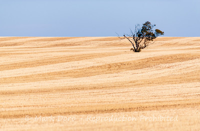 Lonesome, wheat fields, near Ouyen, Victoria
