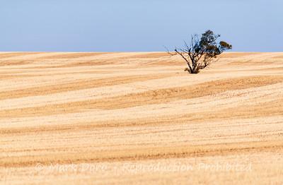 Lonesome, wheat fields, near Ouyen, Victoria