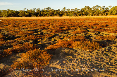 Dry lake bed, Green Lake, Victoria