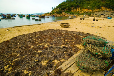 Seaweed drying in the sun at a fihing village in Quy Nhon - Vietnam