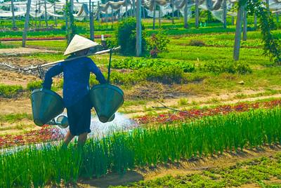 Peasant farmer woman waters her crop