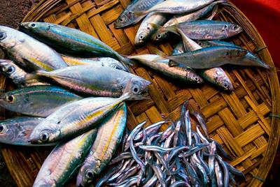 3 types of fish on display at street market - Vietnam