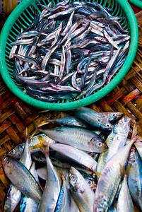 Fish on display at street market - Vietnam