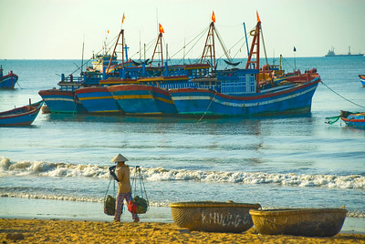 Woman carries her load between beached basket boats (thung chai) and the fleet offshore - Quy Nhon - Vietnam