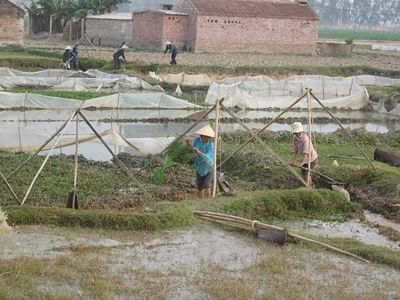 Planting rice in December, on the road to Ha Long City, Vietnam, 2003