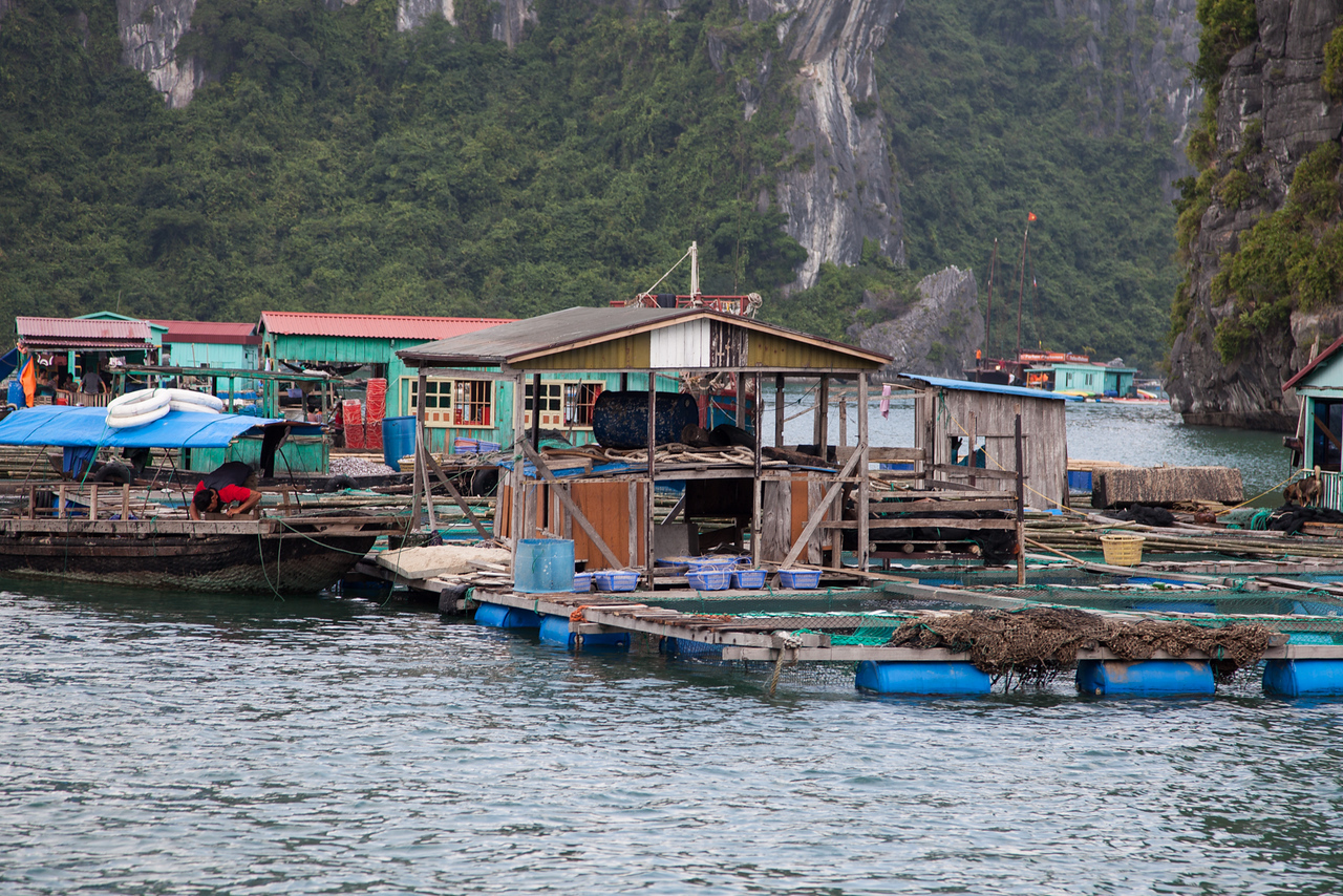 A fishing village in Halong Bay. The flat section in the front contains several tanks (made of net) to hold the fish.