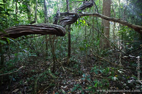 Cat Tien National Park. Forest