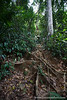 Trail Through the Rainforest