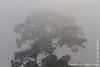 Morning mist at Crocodile Lake