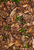 Rainforest Leaf Litter