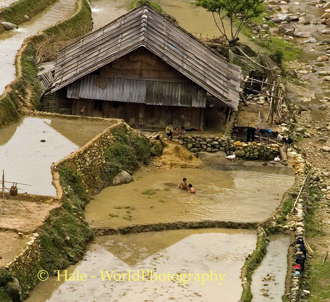 Children Playing in Flooded Rice Paddy, Sapa Vietnam