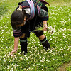 Hmong Girl Picking Clover to Braid a Wreath, Sapa Vietnam
