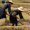 Hmong Woman Preparing Ground for Rice