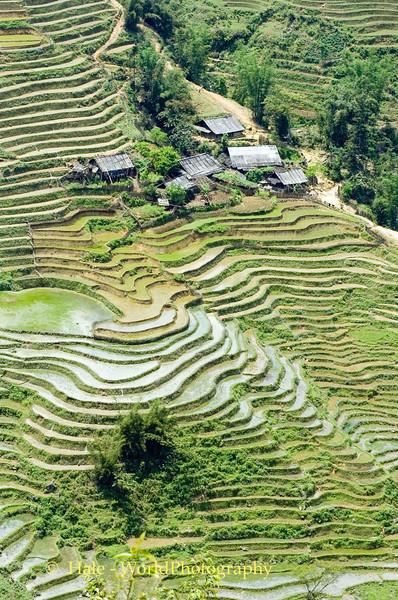 Flooded Rice Paddies, Sapa Vietnam