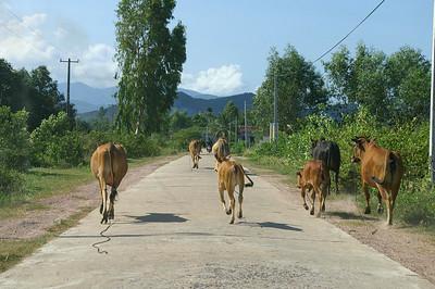 NhaTrang scene