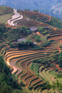 © Joseph Dougherty. All rights reserved.   Terraced rice paddies in the Muong Hoa Valley of Northern Vietnam.